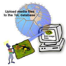 Upload Media to the ToL Database